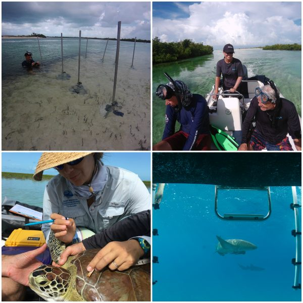 Studying Sea Turtles & Sharks In The Bahamas Aboard Ocean Research Vessel ANGARI