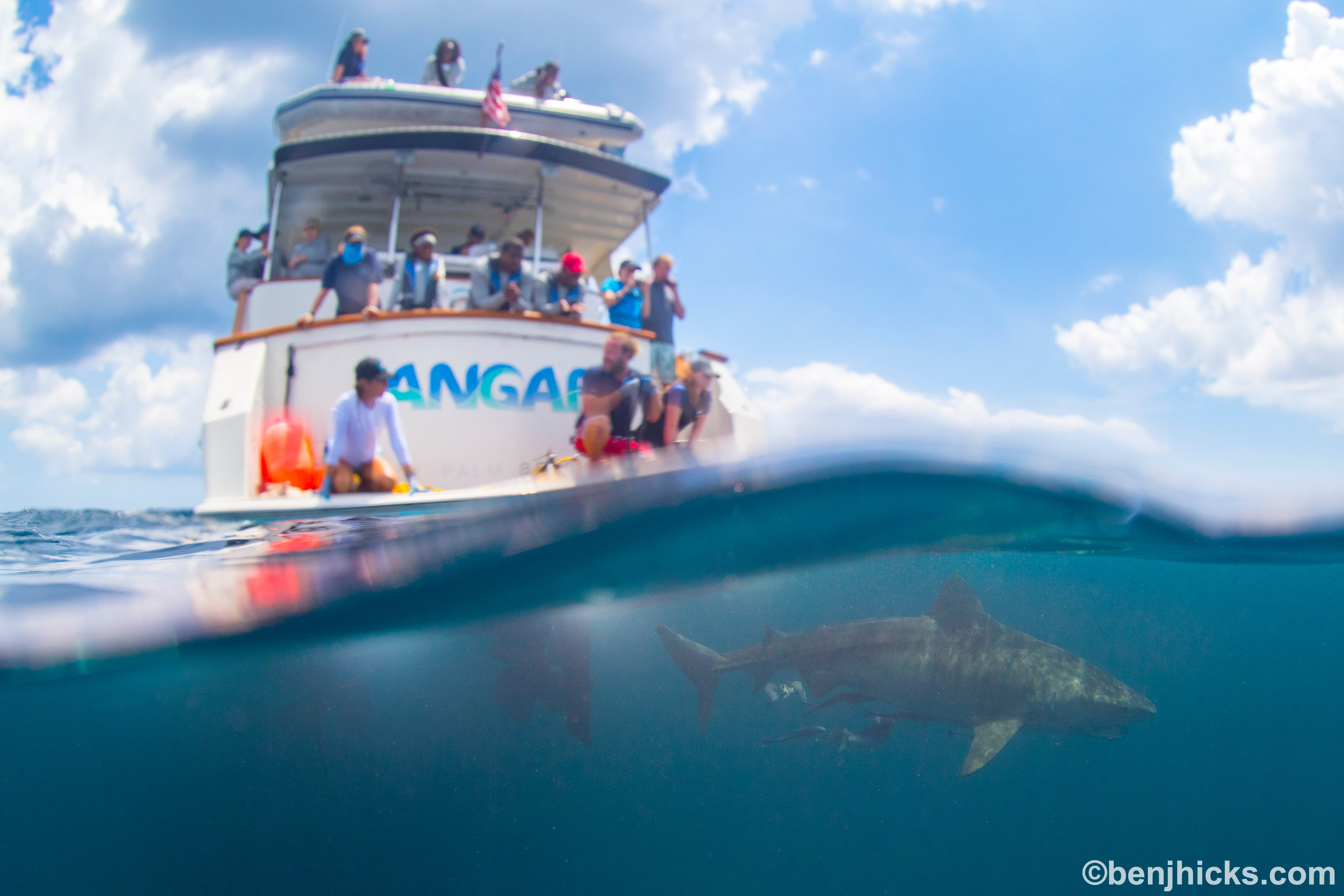 EXP 27: Great work everyone! The team caught, tagged and released this beautiful 11ft tiger shark; PC: Ben J. Hicks