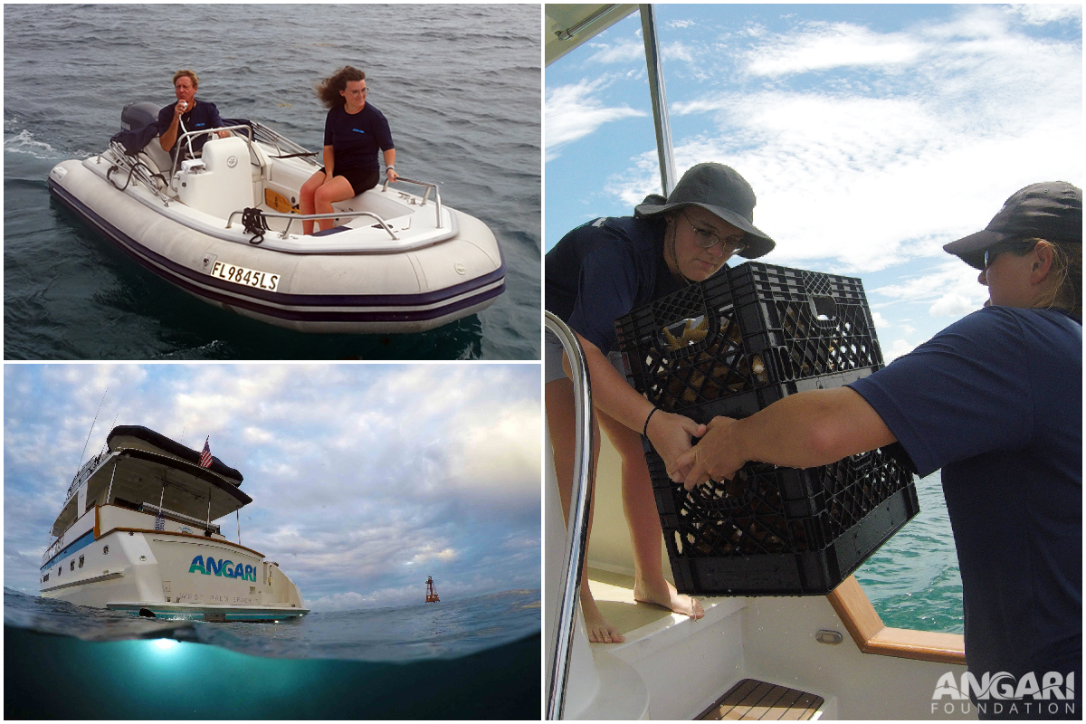 Collage of experiences during ANGARI Foundation internship at Corapalooza in the Florida Keys
