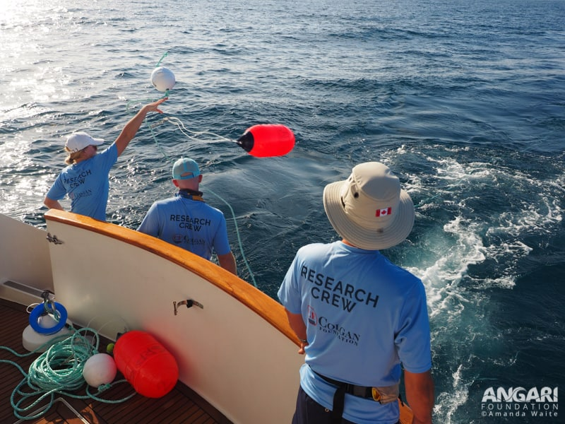 Stephen Kajiura's shark research team deploys a drumline from R/V ANGARI