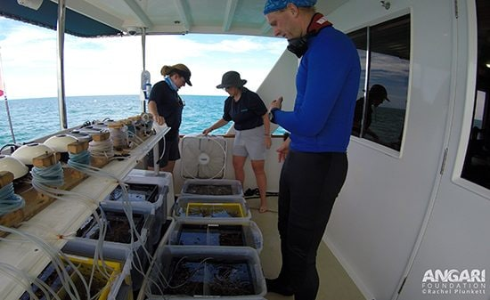 Setting up staghorn coral holding tanks for Coralpalooza onboard R/V ANGARI.