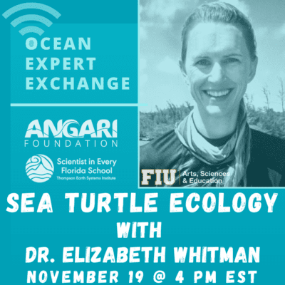 OEE Sea Turtle Ecology
