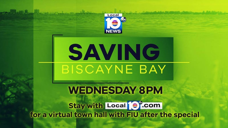 Saving Biscayne Bay ABC10 FIU