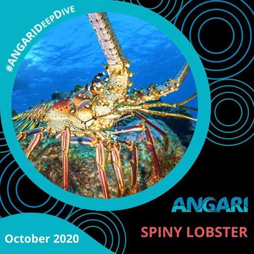 ANGARI Deep Dive – Spiny Lobster