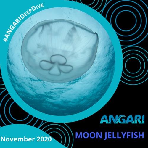 ANGARI Deep Dive – Moon Jellyfish
