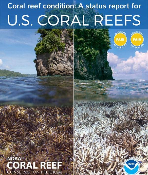 Report Sounds Alarm On Ongoing Decline Of US Coral Reefs