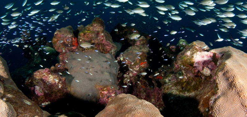 NOAA Is Expanding The Flower Garden Banks National Marine Sanctuary