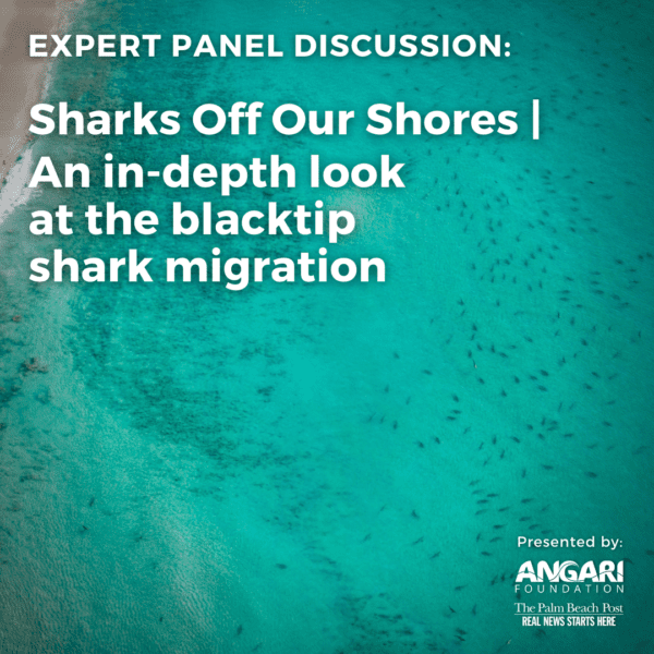Sharks Off Our Shores Panel Thumbnail