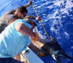 ANGARI Deep Dive Sailfish