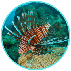 invasive species lionfish ocean expert exchange free webinar