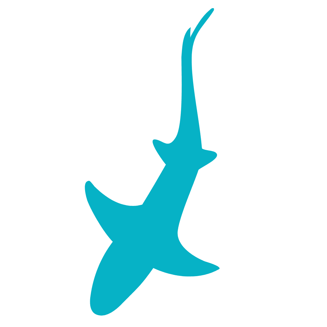 ANGARI Light Blue Shark